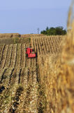 Corn harvest 01 Royalty Free Stock Photography