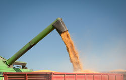 Corn harvest Stock Photos