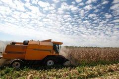 Corn harvest. On farmland in brazil Stock Image