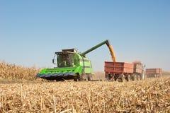 Free Corn Harvest Stock Photography - 23708612