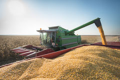 Free Corn Harvest Royalty Free Stock Photo - 46711105