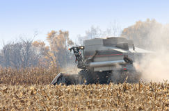 Corn Harvest Stock Photo