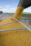 Corn Harvest. Grain being loaded into a trailer Stock Photos