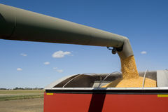 Corn Harvest. Grain being loaded into a trailer Royalty Free Stock Photography