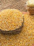Corn Harvest Royalty Free Stock Photo