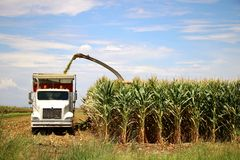 Corn Harvest. Corn is being harvested by forage harvester and collecting truck Royalty Free Stock Photos