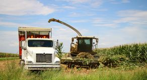 Corn Harvest. Corn is being harvested by forage harvester and collecting truck Royalty Free Stock Images