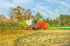 Corn harvest with a combine harvester Stock Images