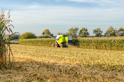 Corn harvest with a combine harvester Royalty Free Stock Images