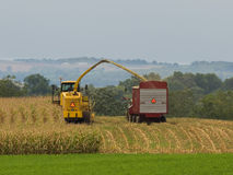 Corn harvest Stock Images