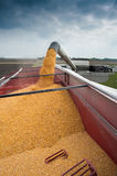 Corn harvest Stock Images
