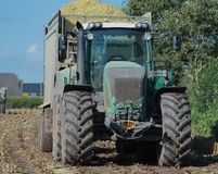 Corn harvest, corn forage harvester in action, harvest truck with tractor royalty free stock image