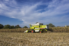 Corn harvest Royalty Free Stock Photography
