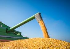 Corn harvest Royalty Free Stock Photography