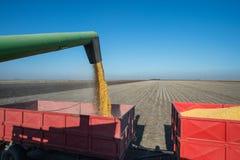 Corn harvest Royalty Free Stock Photos