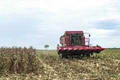 Corn Harvest Royalty Free Stock Image