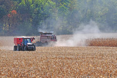 Corn harvesting. Farm tractors are working on corn harvesting Royalty Free Stock Photo