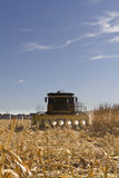 Corn Harvesting Stock Image