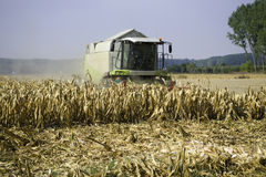 Corn harvesting Royalty Free Stock Photo