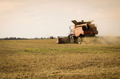 Corn harvesting Stock Photography