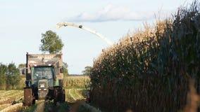 Corn harvesting stock video