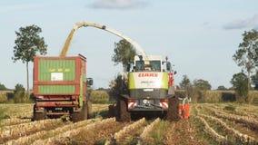 Corn harvesting stock video footage