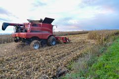 Corn harvesting time Royalty Free Stock Photos