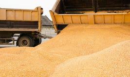 Corn  heap Stock Photography
