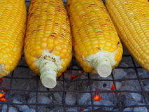 Corn on the hot stove Stock Images
