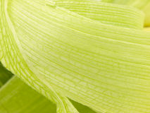 Free Corn Husk Background Royalty Free Stock Image - 11043856