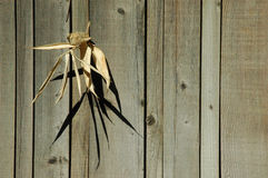 Corn Husk Fence Royalty Free Stock Photography