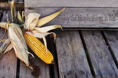 Corn husks, with enjoy life quote. Grey wooden crates carved Enjoy the simple things in life, husked and non husked corn cob resting on display, can use as Royalty Free Stock Photos