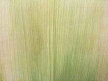 The corn husks isolated. Stock Photos