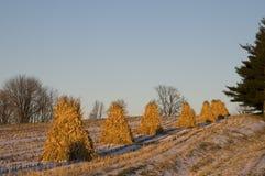 Corn Husks Piles Stock Photos