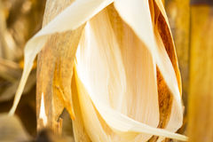 Corn husks Stock Image