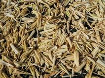 Corn husks Stock Photo