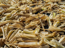 Corn husks Stock Images