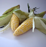 Corn in Husks Royalty Free Stock Images