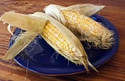 Corn in Husks on Yellow Plate Royalty Free Stock Images