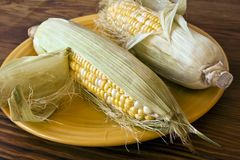 Corn in Husks on Yellow Plate Royalty Free Stock Photo