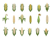 Corn icon. S. Vector illustration isolated on white background. Concept for organic products label, harvest and farming, grain, bakery, healthy food Royalty Free Stock Image