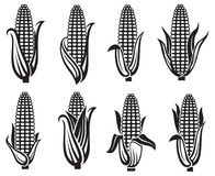 Free Corn Images Set Royalty Free Stock Photography - 99765787