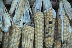 Corn-1 indio Fotos de archivo libres de regalías
