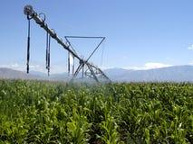 Corn irrigation. Large sprinkler irrigation watering corn Stock Image
