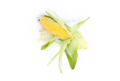 Corn isolated Stock Photos