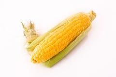 Corn isolated Stock Photography