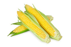 Corn isolated. An ear of corn isolated on a white background Stock Photo