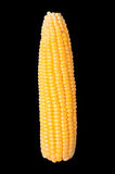 Corn isolated with clipping path. Royalty Free Stock Image