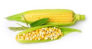 Corn isolated Royalty Free Stock Photos