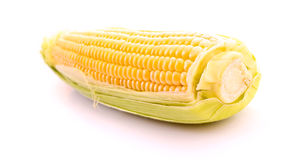 Corn isolated on white Royalty Free Stock Photo